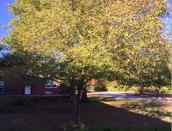 Tree observation