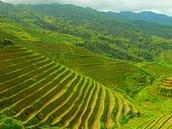 Longsheng Rice Terrace 龙胜各族自治县米台Lóngshènggèzúzìzhìxiànmǐtái