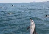 New Zealand leading eco-tourism destination for whale watching and wild cruises!