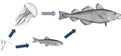 Sea Life Food Chain