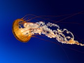 This is a jellyfish!