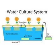 Water Culture Sytem