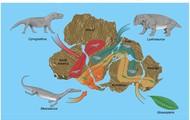 Same Fossils