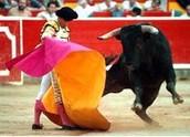 Bullfighing