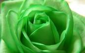 #5 Green