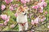 All animals love trees!