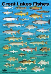 Fish in the Great Lakes