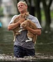 Cat Savers