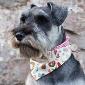 Bandana included for boy dogs!