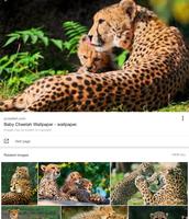 Mom and cheetah