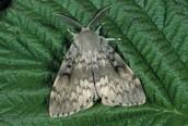 Moth Form