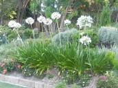 Add colour to your garden