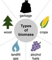 biomass picture 1