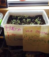 BullEye's Garden