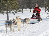 facts about dogsledding