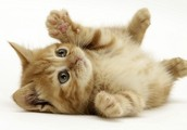 52% percent of owners own more than one cat.