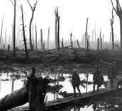 Thick mud in the burnt forest