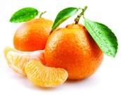 Tangerine Teachers