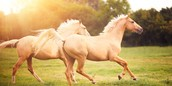 There are different types of horses.