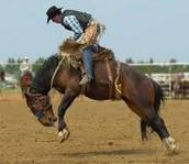 me gustan los rodeos con caballos.