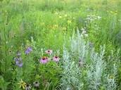 Plants in a Prairie