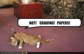 Grading tip for PTs
