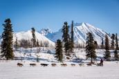 Junior Iditarod journey