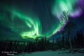 Visit the Aurora Park in Fairbanks, Alaska
