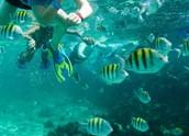 Snorkeling en una laguna.
