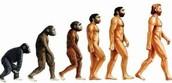 Evolution over time
