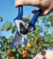 Garden Pruning Shear - £28.00