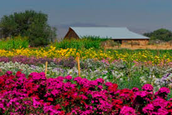 Nevada's Farms