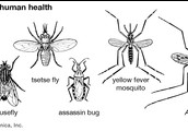 Mosquitoes that cause diseases
