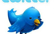 the tweet watching bird : )