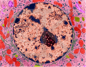microscopic nucleus