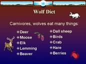 Wolves Diet