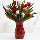 Sweetheart tulips