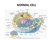 Normal cell