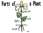 Parts of a Plants and their jobs
