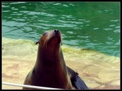 You'll love the sea lions...
