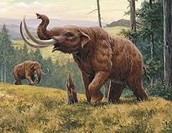 This is a Mammoth
