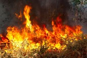 How wildfires are formed