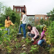 Come to the Community Garden
