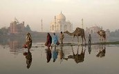 Taj Mahal with a Camel