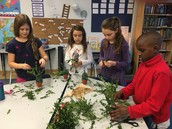 Third graders use cut greens to create an individual topiary.