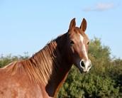 Stallion Star Gazette