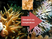 How does the  human impact effect the Great Barrier Reef