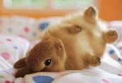 Bunnies,