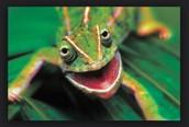 Why chameleons?