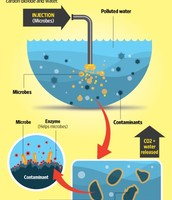 Pros and Cons of Bioremediation on the Water